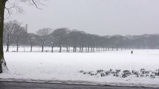 Resilient daffodils in the snow