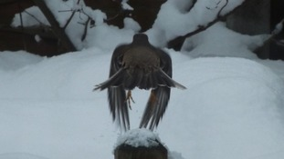 A bird in the snow in Birminhgam.