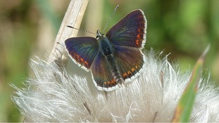 2012: A disaster year for butterflies