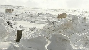 Some farmers have said they stand to lose 90% of their livestock to the cold weather