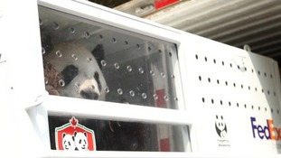 Da Mao begins his journey from China to Canada