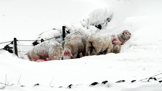 Sheep huddle together in the hills above the Glens of Antrim, Northern Ireland.
