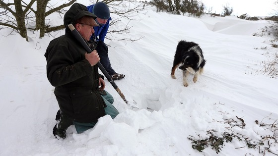 Gareth Wyn Jones looks at his sheepdog, Cap, after the dog picked up the scent of a sheep that had been trapped for four days beneath snow