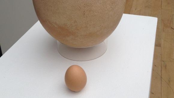 Real Dodo Bird Egg Real Dodo Bird Egg