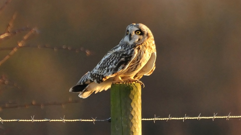 Rare Owls Arrive In Leicestershire Central Itv News