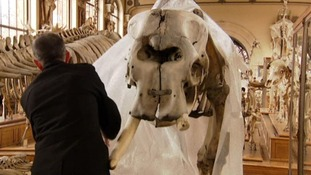 Staff were alerted when they heard the noise of a chainsaw in one of their galleries