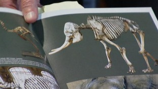 The museum's guide book shows the completed skeleton.