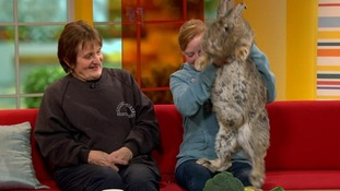 Continental Giant rabbit Ralph weighs nearly four stone.