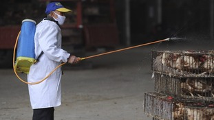 An employee wearing a protection suit sprays disinfectant on chickens at a poultry market in Hefei, Anhui province