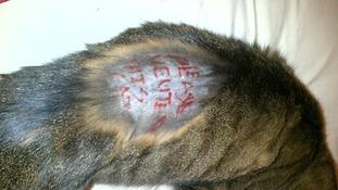 Becks the cat