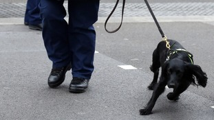 A police dog makes its way along Whitehall prior to the funeral service for Baroness Thatcher at St Paul's Cathedral.