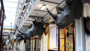 The eight horns could have a street value of £428 million