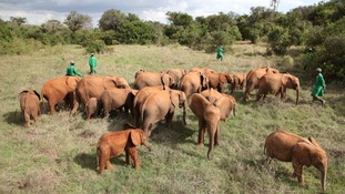 David Sheldrick Wildlife Trust helps protect Kenya's threatened elephants and rhinos