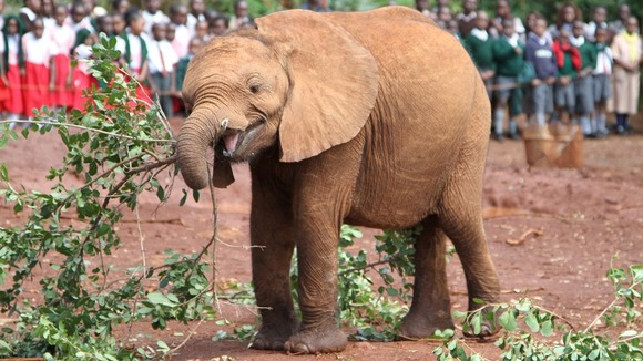 Tundani was transported via charter plane to the DSWT Nairobi Nursery