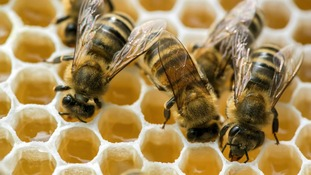 Police say the bees would have stung their assailant
