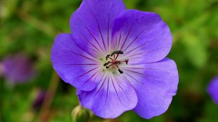 Chelsea Flower Show: Vote for the plant of the centenary