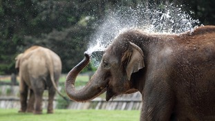 An elephant cooling off in hot weather at Whipsnade Zoo in Bedfordshire