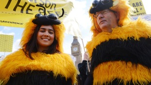 Protesters swarm on Parliament over bee-killing pesticide ban