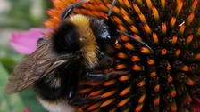 """The ban on """"neonicotinoids"""" pesticides could be introduced within weeks."""