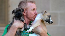 An RSPCA behavioural trainer cuddles two rescued dogs