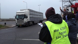 The first truck carrying sheep for live animal export arrives at Dover Port.