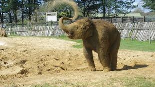 Elephant in the sun