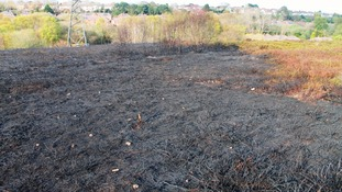 Heath fire aftermath