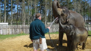 Elephant bath time at Whipsnade Zoo