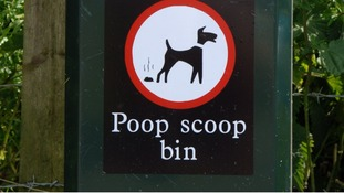 Mayor tries to combat dog fouling in Stevenage