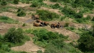 The corpses of dead elephants in Tsavo East Park