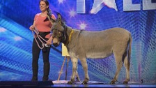 A donkey and raccoon vie for Pudsey&#x27;s BGT crown