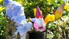 Chelsea Flower Show allows gnomes for the first time