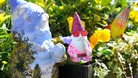 Chelsea Flower Show lifts ban on gnomes