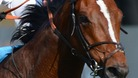 More Newmarket horses tested positive for doping