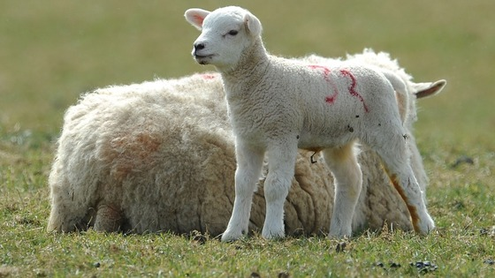Schmallenberg Virus is an emerging livestock disease that has been detected across Northern Europe.