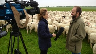 ITV News reporter Penny Silvester speaks to farmers about the devastating impact of Schmallenberg