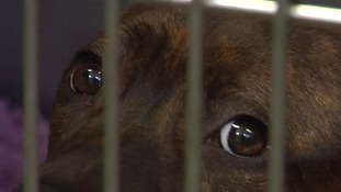 There have been calls for a reform of the Dangerous Dog Act following previous attacks