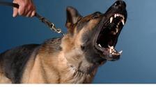 A snarling dog