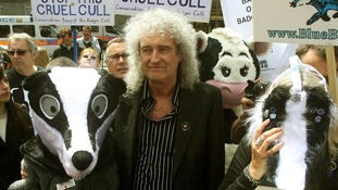 Brian May joins protesters dressed as badgers as they march through central London.