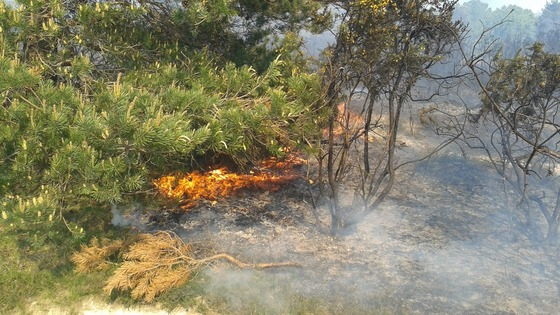 Ashdown Forest fire