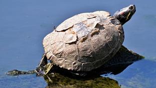 Turtle enjoying the sunshine