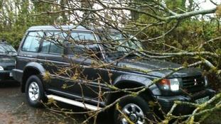 Tree car