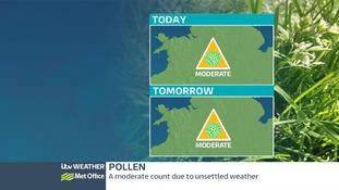 Pollen Report.