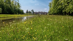 Meadow at Erddig Hall