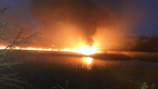 Wildlife and reeds recovering from nature reserve arson attack