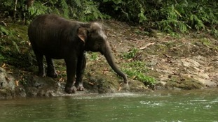 Elephant Family have started a campaign to rescue wild baby elephant Raja.