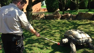 Twycross Zoo's new outdoor tortoise exhibit is now open