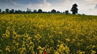 Redbourn, Hertfordshire