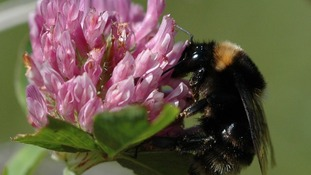 New home for NZ bees?