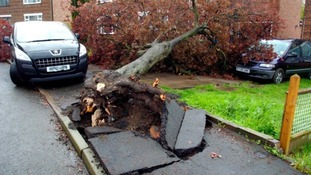 A tree is uprooted after high winds hit Rugby